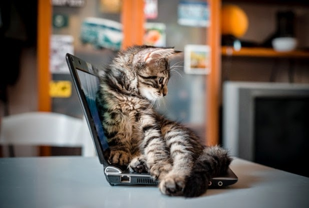 Котенок на ноутбуке